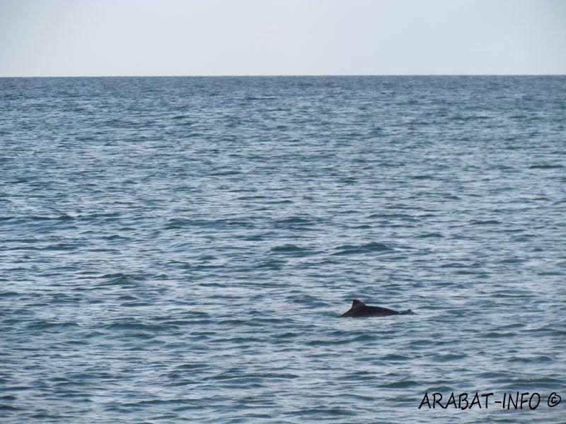 На курорте Херсонщины большие стаи птиц пытались поймать маленьких дельфинов